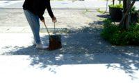 Blanc Basqueと、松野屋のシダ庭ほうきで、お客様をお迎えいたします。